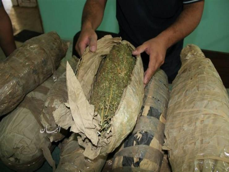 سقوط «أسطورة المخدرات» بحوزته 8 كيلو بانجو وأسلحة نارية في كفر الشيخ