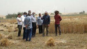 """رئيس جامعة المنيا يتفقد حصاد محصولي القمح والفول بـ""""شوشة""""ويشيد بمجهودات القائمين"""