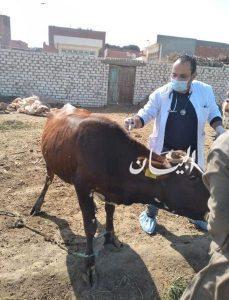 """محافظ الفيوم : تحصين 125 ألف رأس ماشية ضد """"الحمى القلاعية والوادى المتصدع"""""""