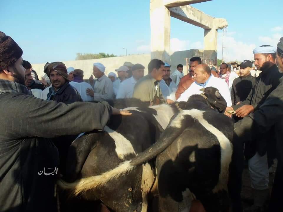 """"""" منى محرز """" حملة جديدة للأبقار ضد الجلد العقدى أبريل المقبل"""