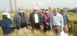 الزراعة: معهد امراض النبات يتابع محصول القمح في محافظة الشرقية ويؤكد ان حالته جيدة ومبشرة