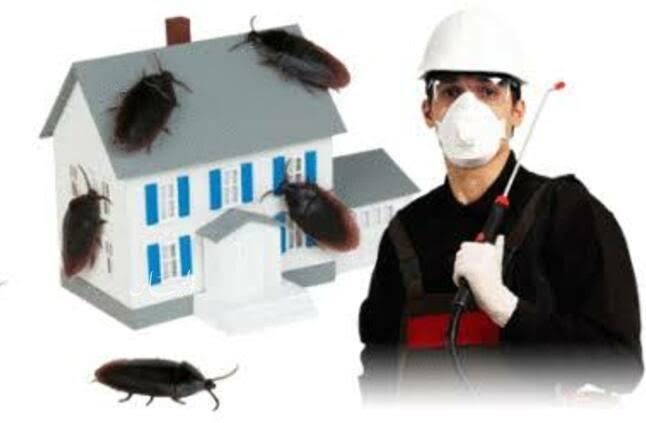 المحكمة الاقتصادية تقضي بغرامة 900 ألف جنيه على احدى شركات إبادة الحشرات